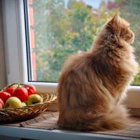 Aforismi sui gatti