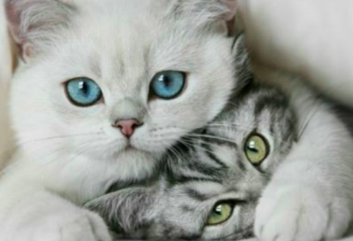 Il meraviglioso mondo dei gatti