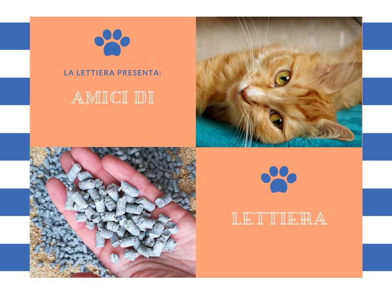 gatti e lettiera