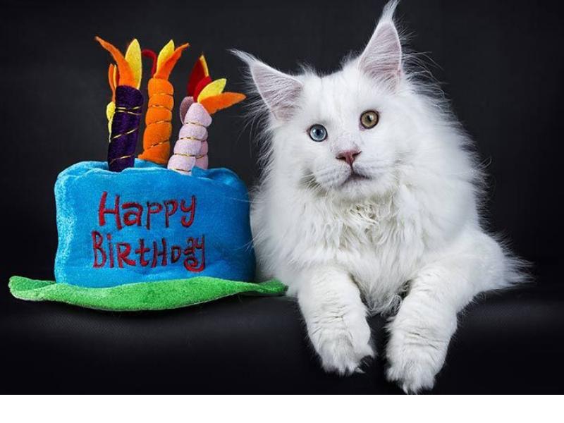 età dei gatti in anni umani