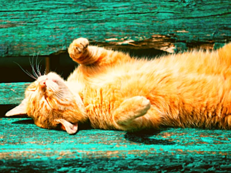 gatto in affanno