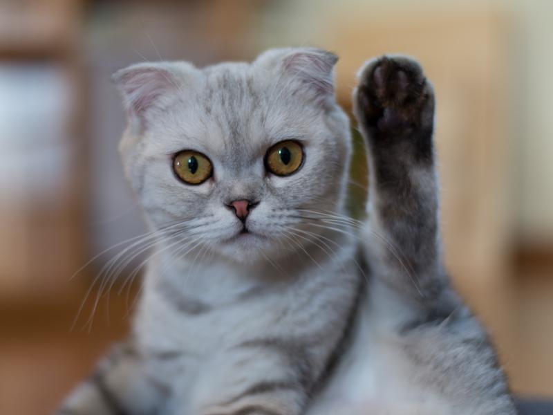 il gatto urina in casa