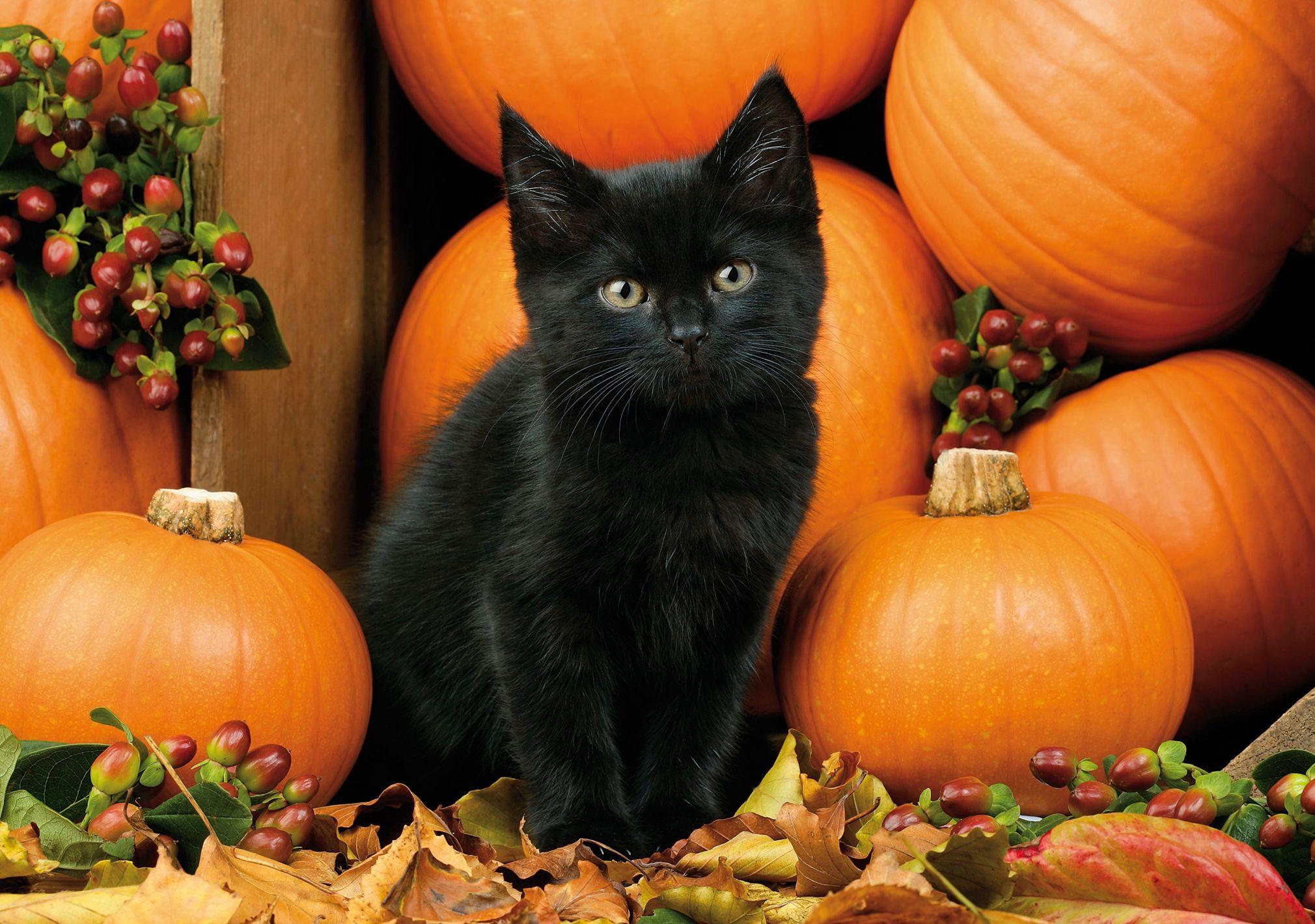 gatto nero e Halloween