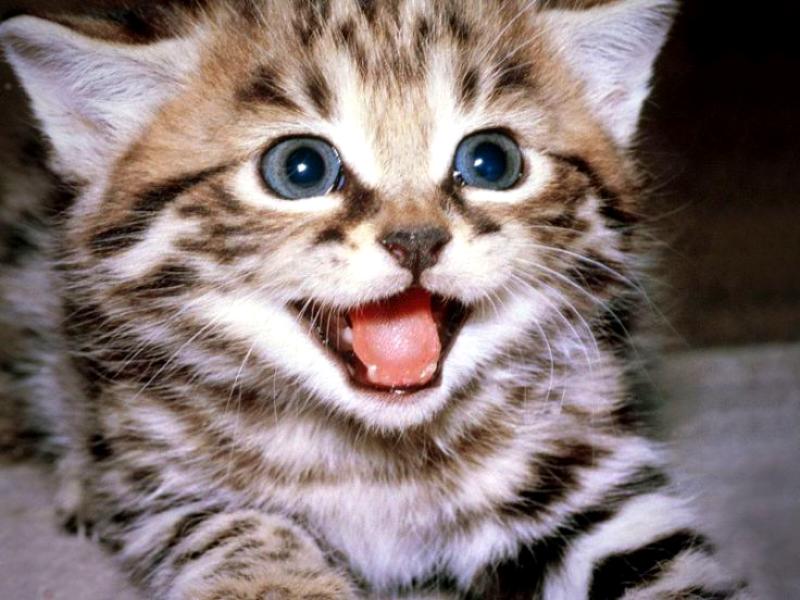 come addomesticare un gatto selvatico
