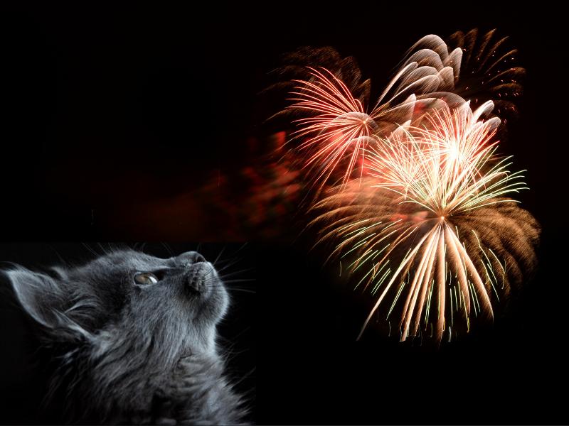 gatti e botti di capodanno