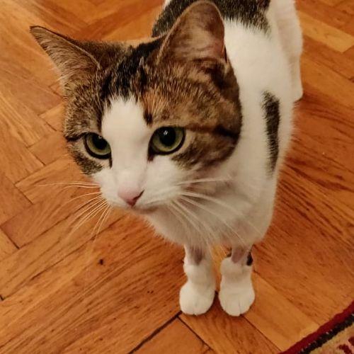 la storia del gatto con gli stivali