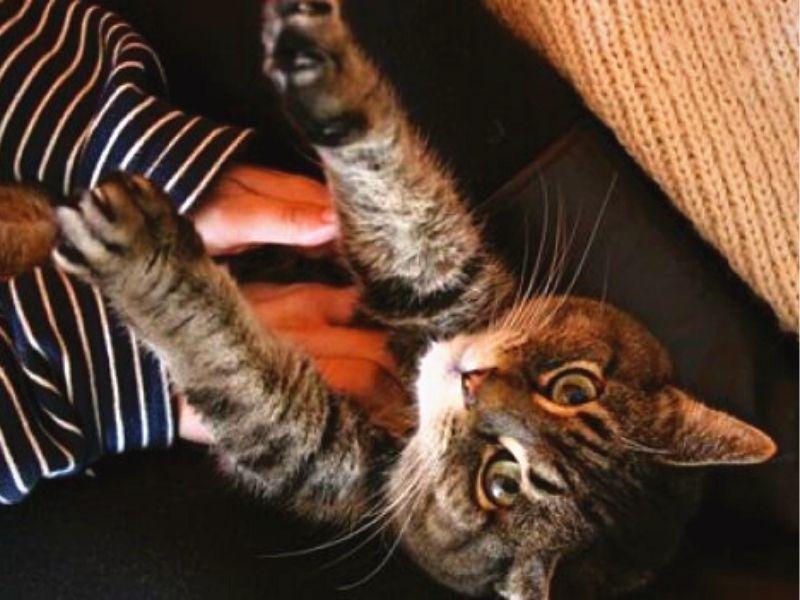 come massaggiare il gatto